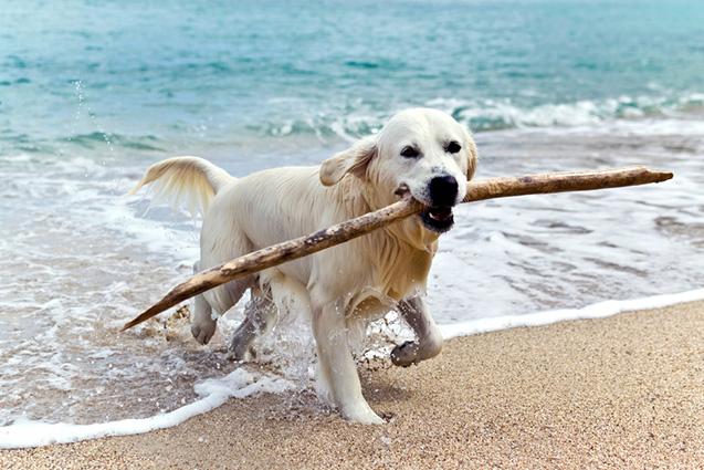 Travemünde mit Hund