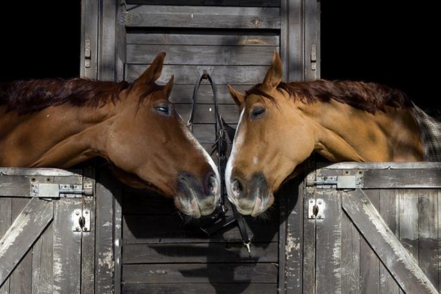 Travemünde und Pferde